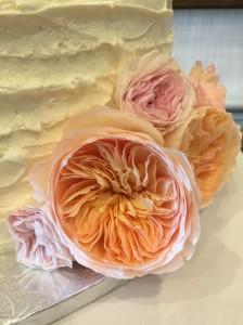 David Austin Juliet roses are stunning.
